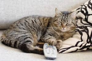 cat-lying-on-sofa